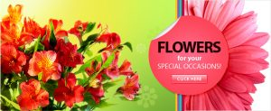 Flowers for your Special Occasions