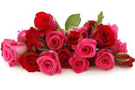 Best Rose in UAE
