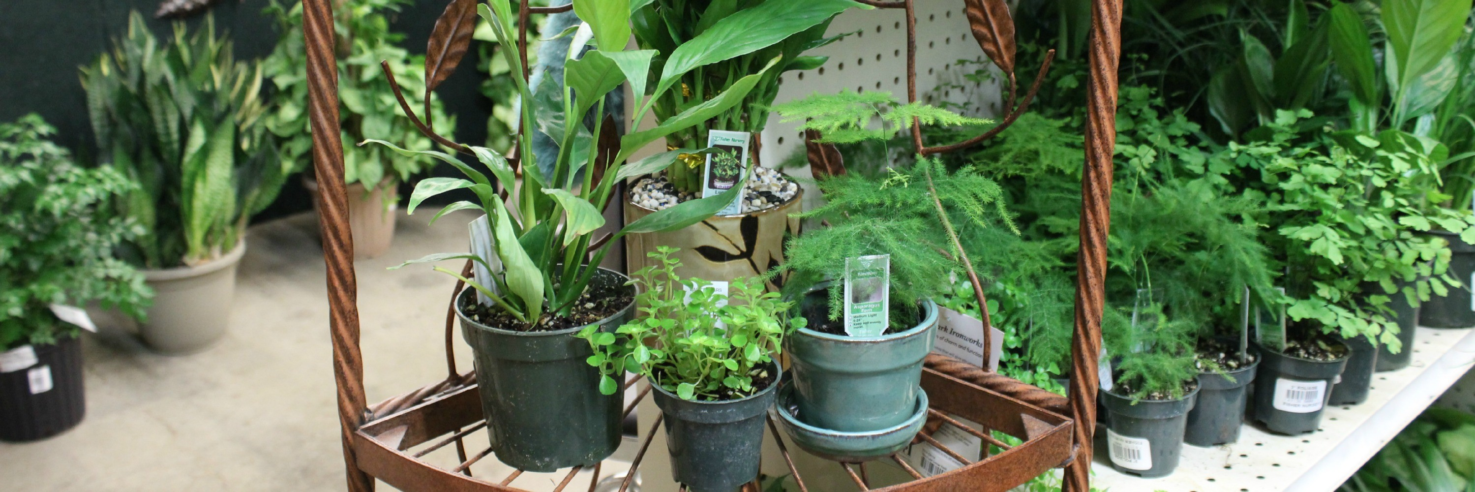 Buy cheap plants in dubai order online outdoor plants in dubai category banner izmirmasajfo Image collections